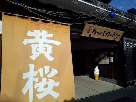 黄桜の写真