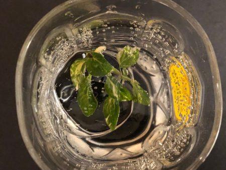 丸氷を焼酎に入れた写真2